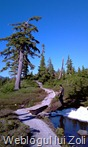 Mt Baker